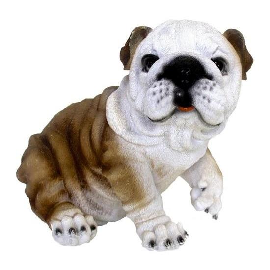 Beeldje Engelse bulldog hond 25 cm