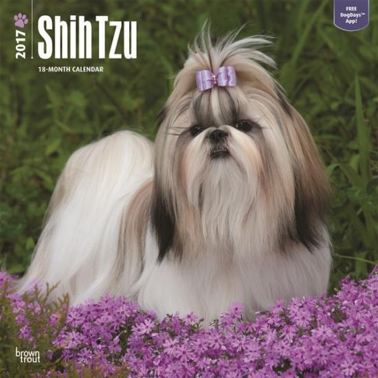 Honden kalender 2017 Shih Tzu
