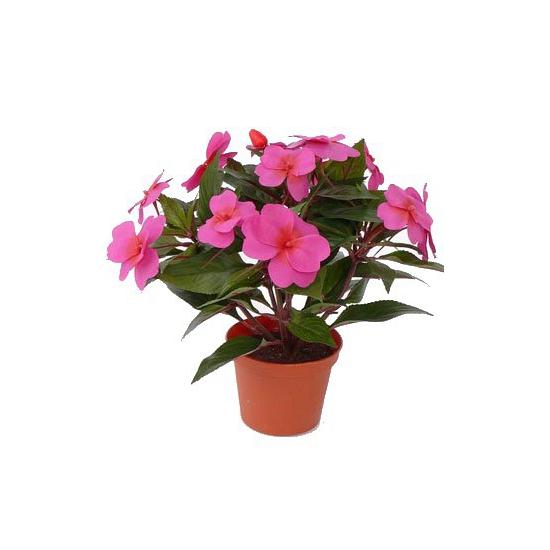 Kunst roze Vlijtig Liesje in pot 25 cm